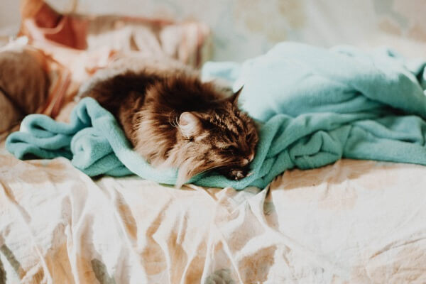 Cat Curling Up on a Blanket By Linh Nguyen on Unsplash