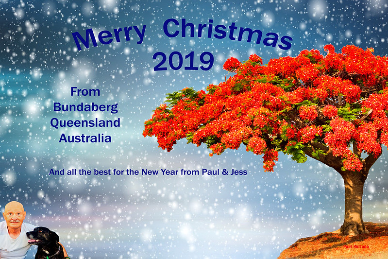 Australian Christmas Card Featuring the Christmas Bush-Merry Christmas 2019. By Paul Hurtado. By Paul Hurtado on Flickr