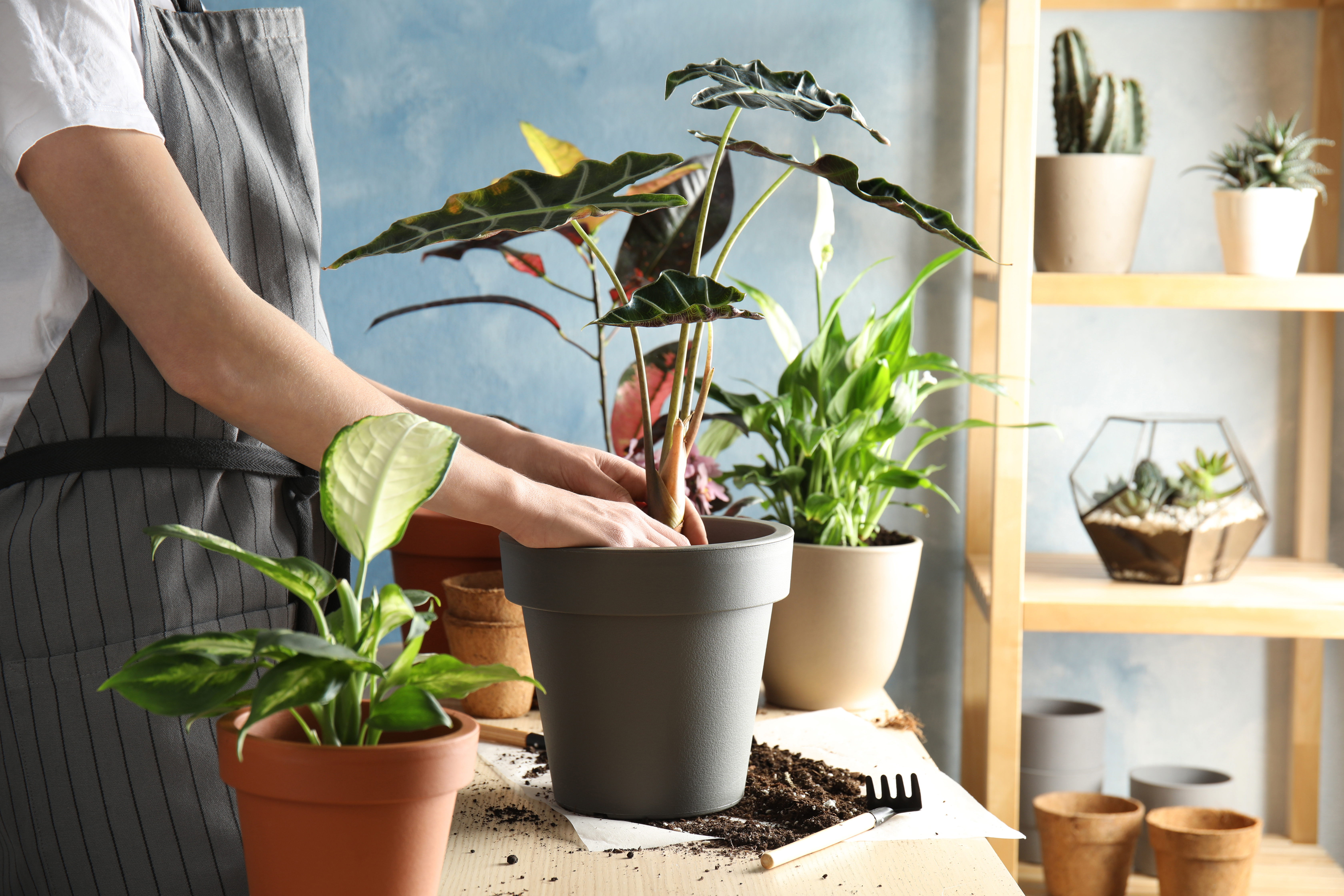 person potting plants indoors, potting benches
